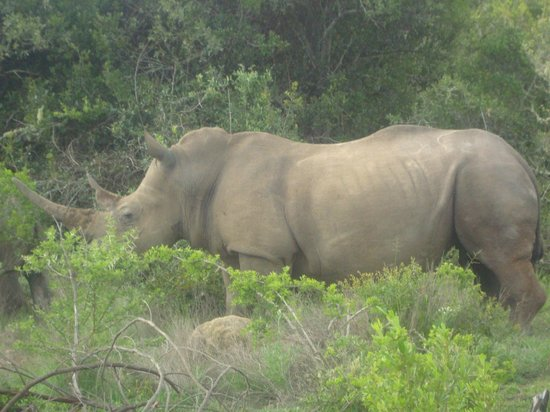 Idwala Game Lodge: Magnificent
