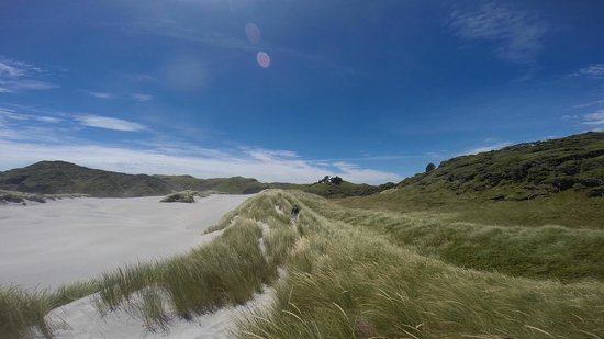 The Innlet Backpackers and Cottages : Whaririki Beach - a nearby stunning walk!