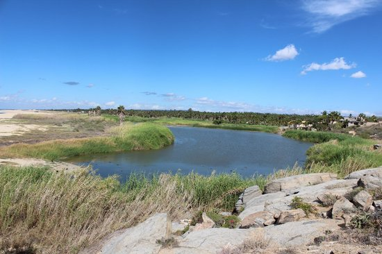 Posada La Poza: Fresh water lagoon provides spot for migrating birds