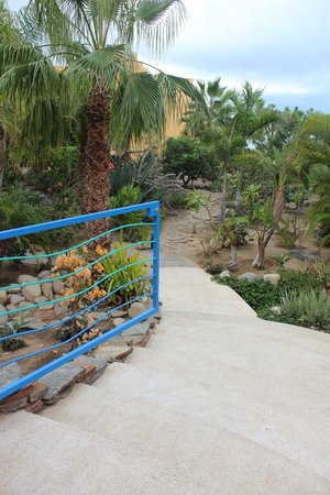 Posada La Poza: Lovely gardens created by owners, anything that grows in Baja is here.