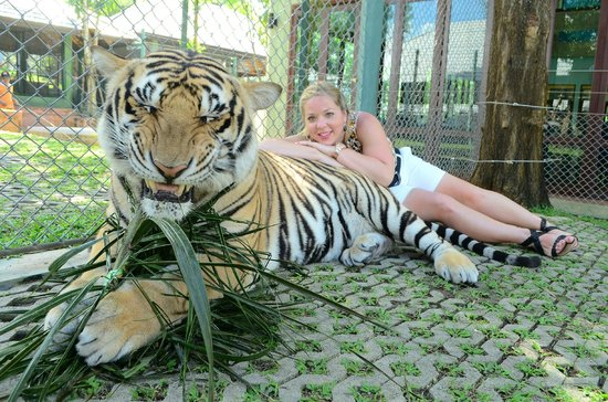 Tiger Kingdom: Me with the large tiger