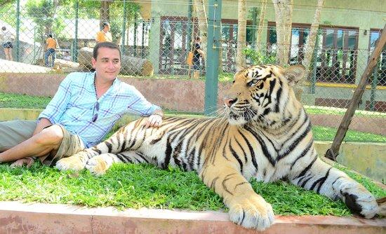 Tiger Kingdom: A little intimidating