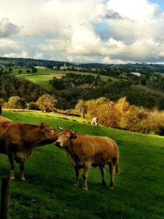 Le Senechal: View of Saveterre de Rourrgue from afar
