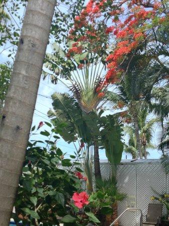 Key West Harbor Inn : Lush Gardens