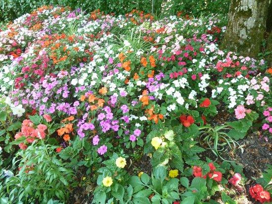 Parc Floral et Tropical de la Court d'Aron: que de fleurs