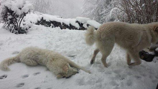 Haus Schonegg BnB: Os cães são dóceis