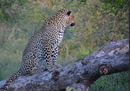 Mohlabetsi Safari Lodge : first drive at Mohlabetsi and we already saw the Big Five!...