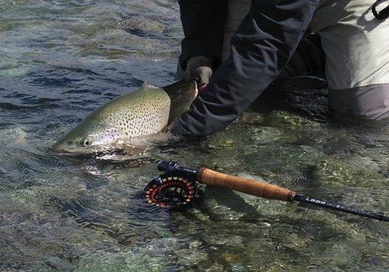 Trout Bohemia Guided Fly Fishing: Trout Bohemia fly fishing, the best of New Zealand trout 4