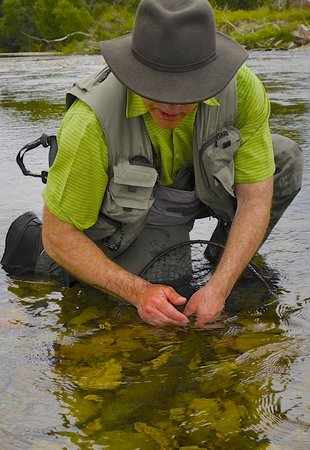 Trout Bohemia Guided Fly Fishing: Trout Bohemia fly fishing, the best of New Zealand trout 3