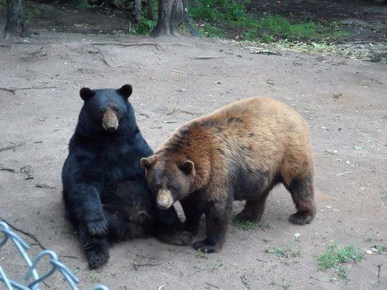 Oswald's Bear Ranch: Bears