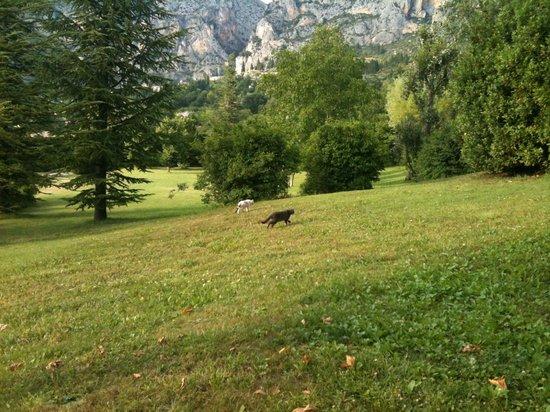 La Bastide de Moustiers : View of a cat running by