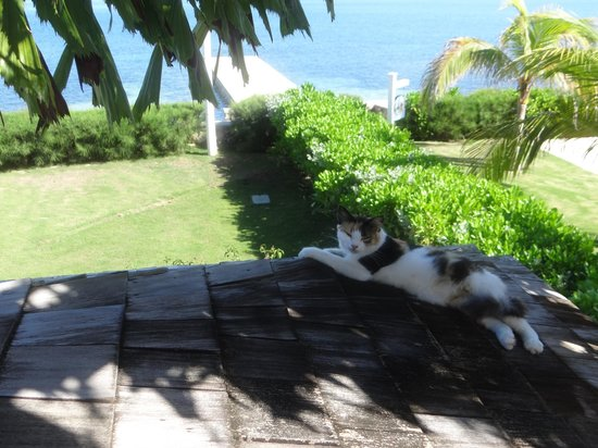 Sandals Montego Bay: Cat sleeping on our balcony