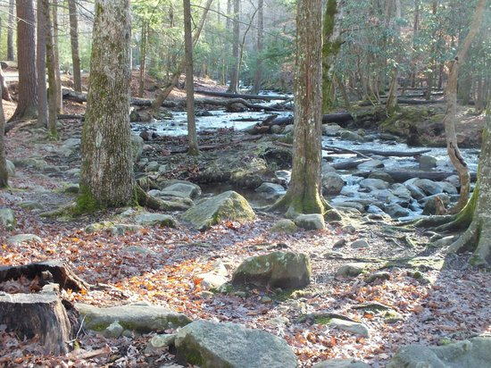 Photo Fast Tours: Stream running through a nice campground