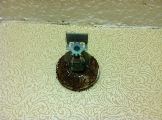 The Watson Hotel: rusty sprinkler head in bathroom