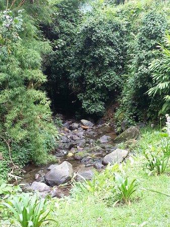Las Orquideas Bed & Breakfast: River 2