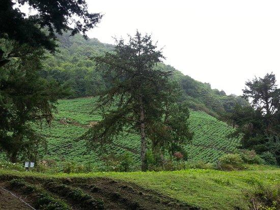 Las Orquideas Bed & Breakfast: Cerro Punta