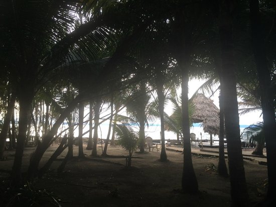 Thatch Caye Resort : More views from dinner