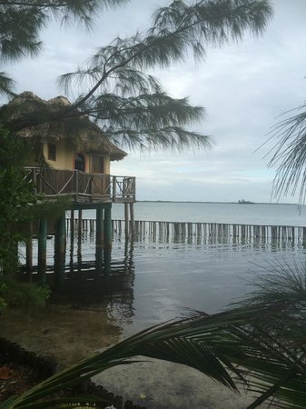 Thatch Caye Resort : My home for the week!