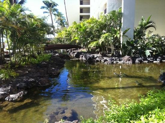 Mauna Lani Bay Hotel & Bungalows: waterways inside and out of the open air hotel full of exotic fish, even hammer head sharks