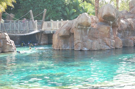 Discovery Cove: reef/snorkeling area