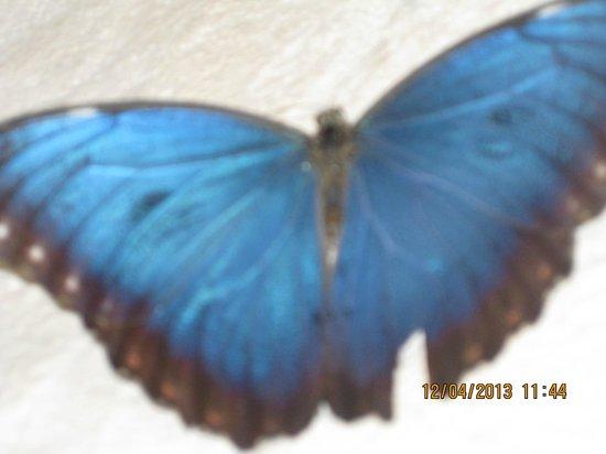 Luxury Bahia Principe Akumal: Blue Morpho in Akumal lobby