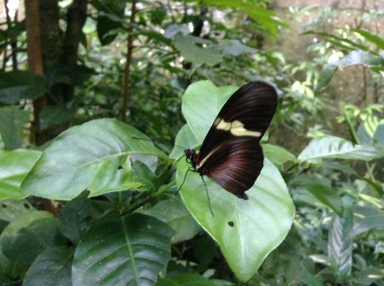 Monteverde Butterfly Garden (Jardin de Mariposas): I only had my iPhone with me and I was surprised at how close some of the butterflies let you ge