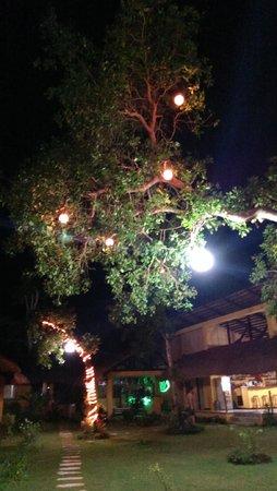 La Natura Resort: Garden by treelights