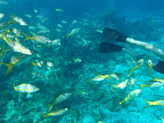 Pat & Diane Snorkeling : So many fish to see!