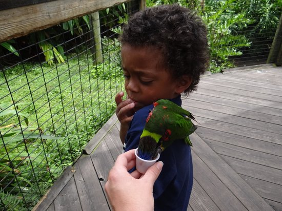Brevard Zoo : Feeding birds
