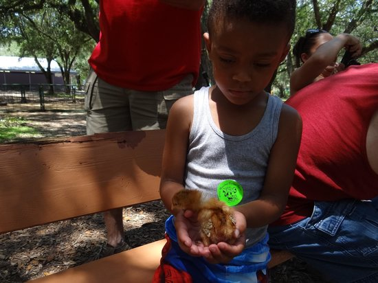 Green Meadows Petting Farm: My son holding a small bird
