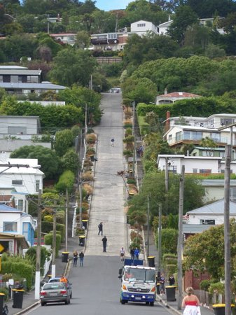 Headfirst Travel - Day Tours: Baldwin Street - Steepest Street in the World