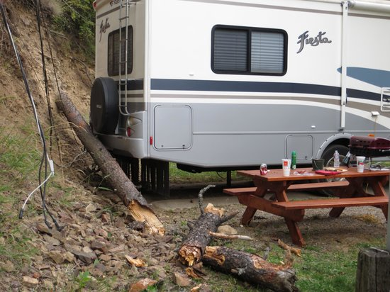 Wolf Lodge RV Campground: tree down