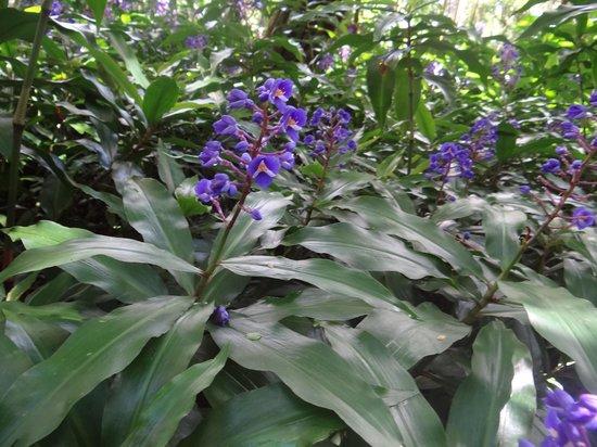 Lyon Arboretum : Plants
