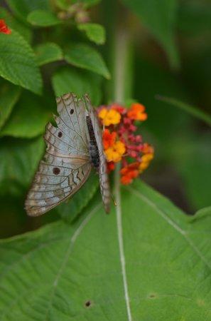 Ladera Resort: eco friendly resort