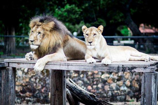 Parque Zoobotanico de Teresina