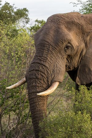 Sausage Tree Safari Camp: African Elephants