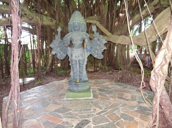 Kauai's Hindu Monastery: The meditation Banyan tree