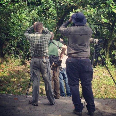 Canopy Lodge: Birding