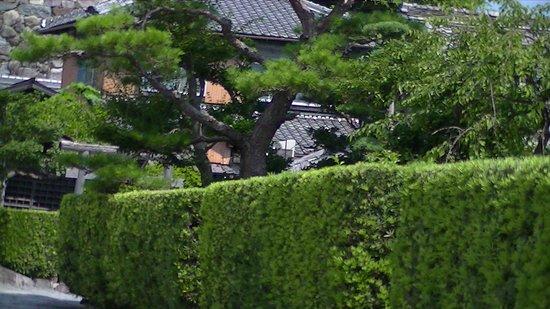 Gojoban Yashiki: 御城番屋敷の生け垣