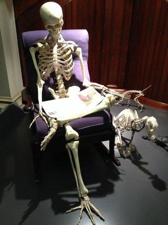 Australian Museum: Skeletons outside the closet