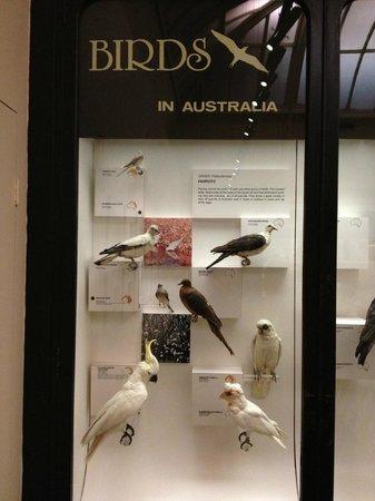 Australian Museum: Australian birds