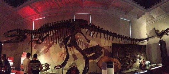 Australian Museum: Dinosaur section