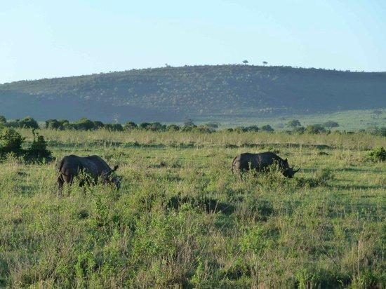 Sentrim Mara Camp: Nashorn gesehen