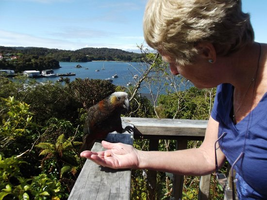 Stewart Island Lodge : Feeding the locals outside our room