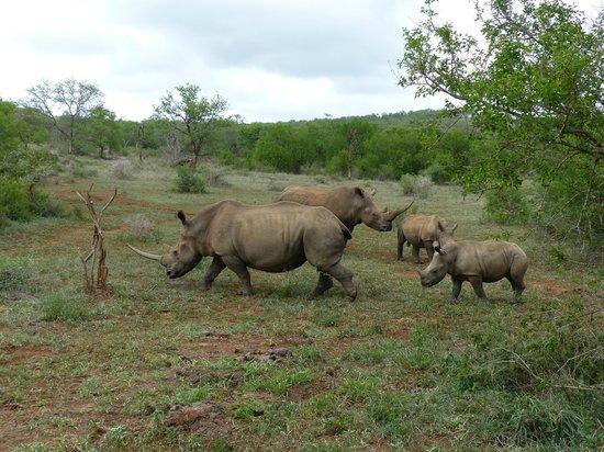 Elephant Coast Guest House: Rhinos at Hluhluwe