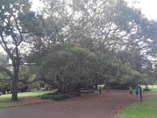 Albert Park: in park