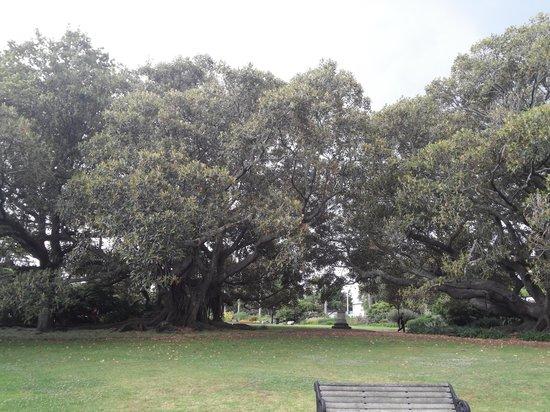 Albert Park: in park 3