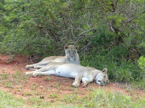Happy Jackal Guest House : Addo Elephant Nationalpark