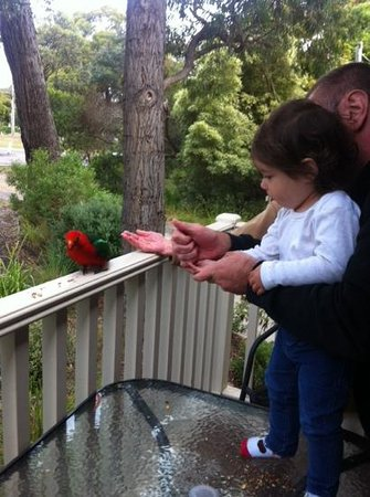 Around About Lorne: feeding time
