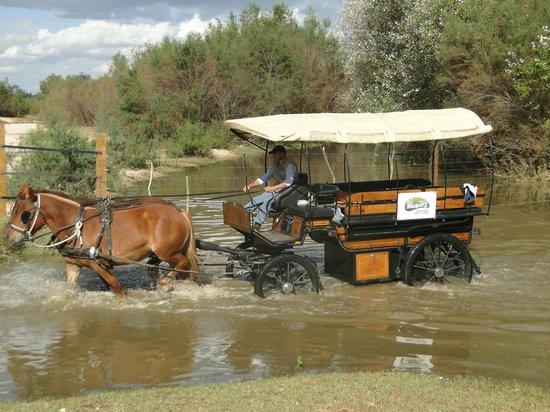 Ardea Purpurea Lodge: Rutas por Doñana desde el Hotel
